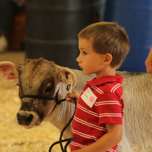 Little Britches Compete in the Show Ring