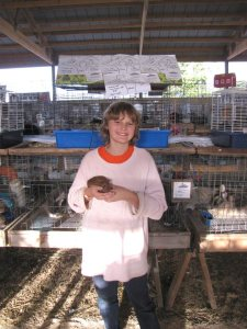 Small Animal 4H Exhibit Guinea Pigs