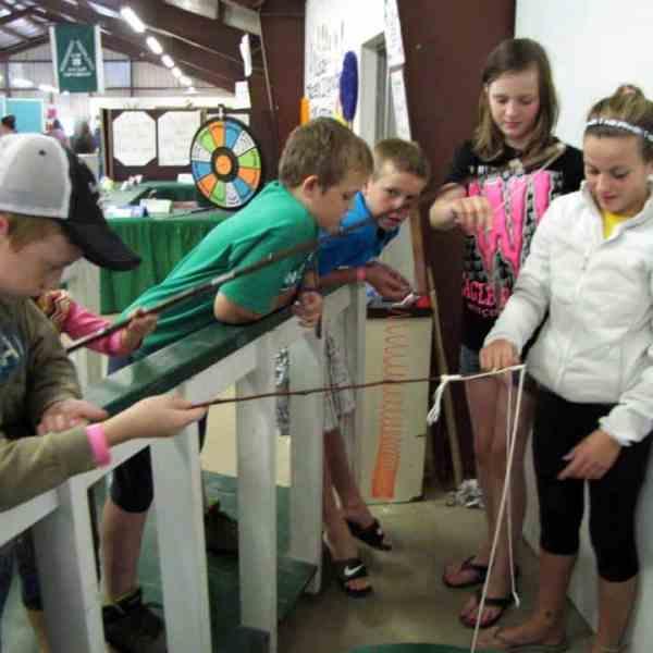 Junior Fair Exploring Judging Results