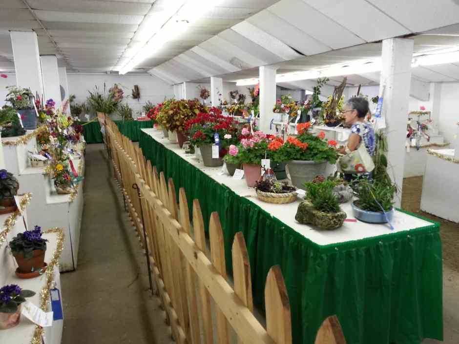 Flowers Open Class Fair Exhibits