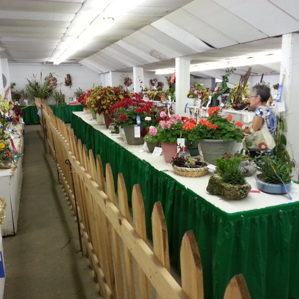 Open Class Flowers and Houseplants Judging Results
