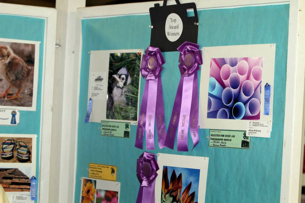 4H and FFA Youth Exhibitors show their talent in the Photography Exhibits