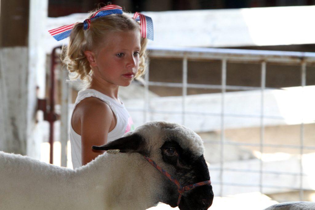 Little Shepherds Showmanship at the Fair