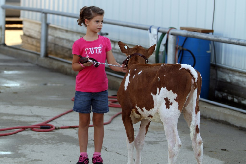Youth Washing and Caring for Animals