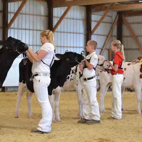 WI Holstein Assoc District 8 Junior Showmanship