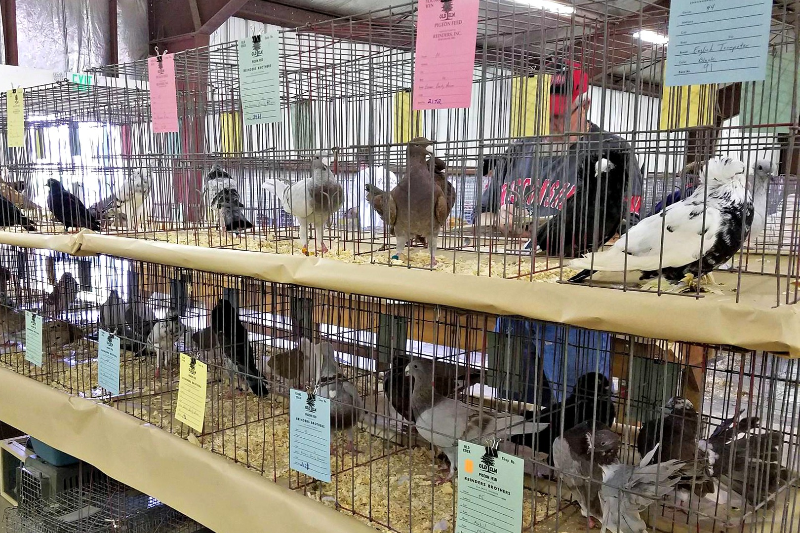 Beaver Pigeon and Bantam Fall Swap Meet Wisconsin