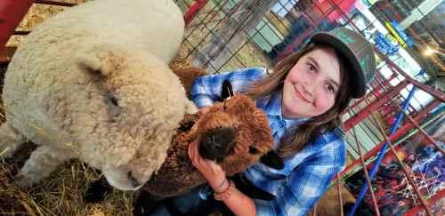 Brianna Ganske Sheep Exhibitor