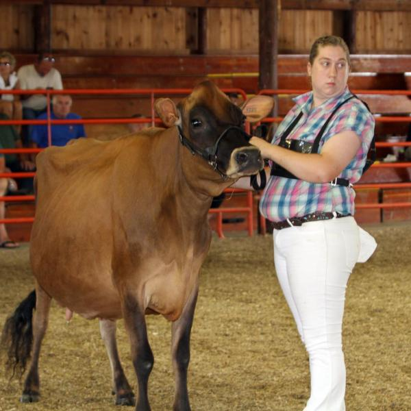 Open Class Dairy Cattle Judging