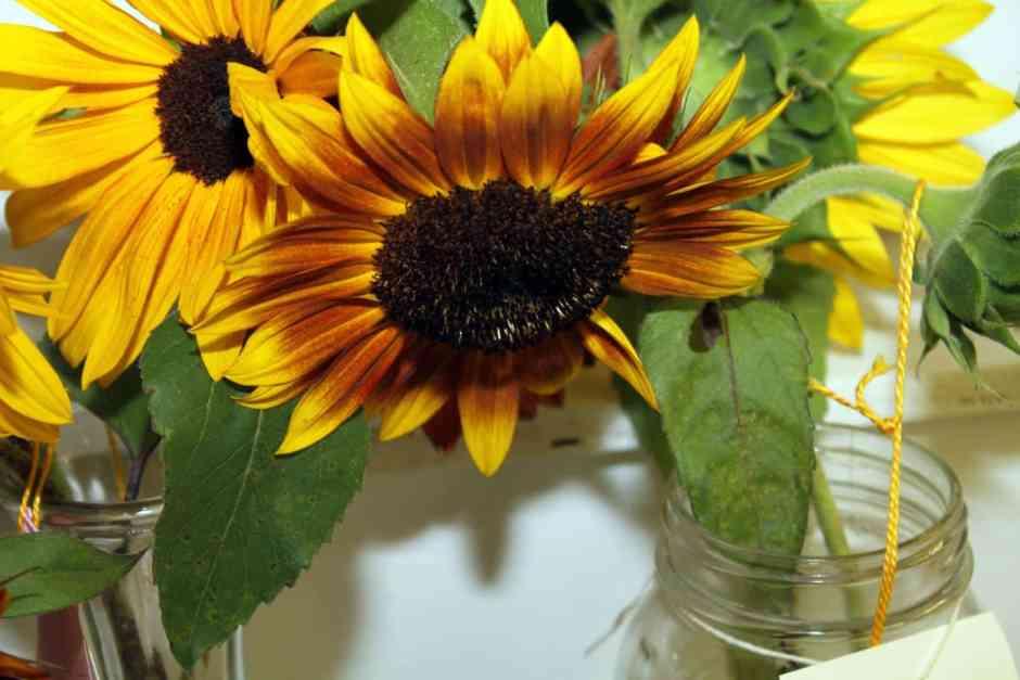 Dodge County Fair Open Class Flowers