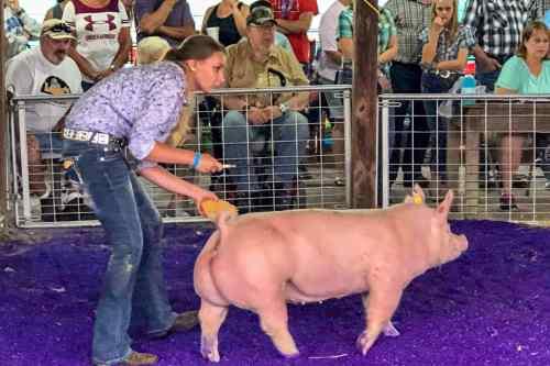 Kaitlin Neu at Dodge County Fair
