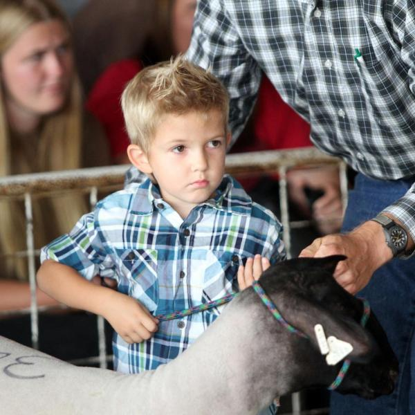 Little Shepherds Showmanship Contest
