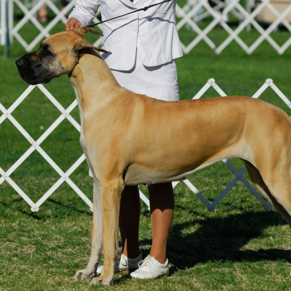 Dodge County Canine Club presents UKC Dog Show