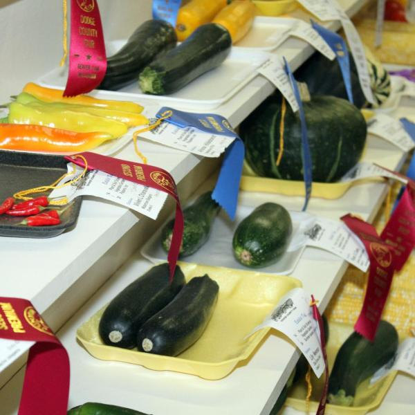 Junior Fair Fruit and Vegetables Judging