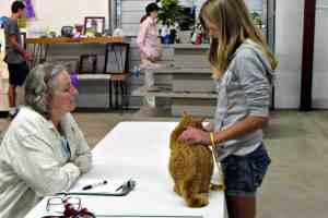 junior fair cat kitten judging