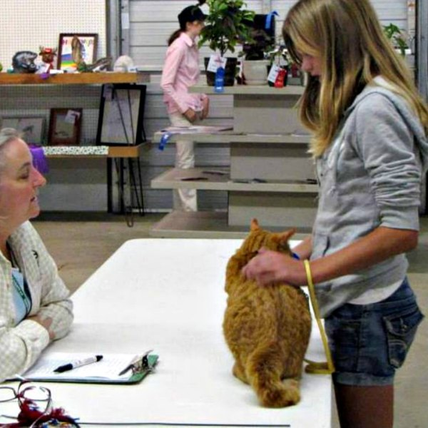 Junior Fair Cat and Kitten Judging