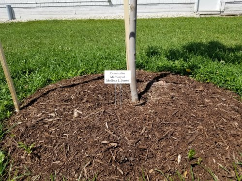 shade tree donation memorial