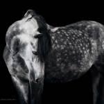 Wiebke Haas Fine Art Equine Dodho
