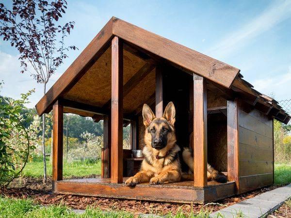 Zelf steigerhouten hondenhok maken met de goede bouwtekening for Goedkoop laten behangen