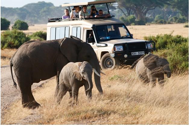 Hop Onto An African Safari