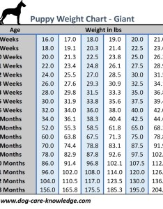Puppy weight chart for giant breed size dogs also this is how big your dog will be rh care knowledge