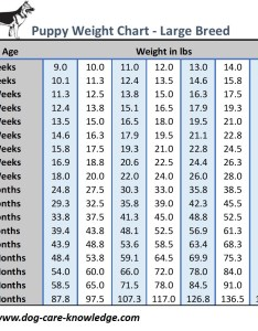 also puppy weight chart this is how big your dog will be rh care knowledge