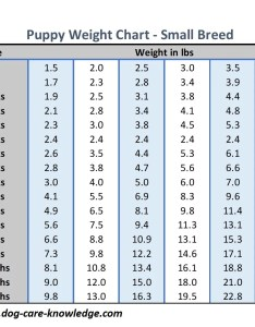 Puppy weight chart for small breed dogs also this is how big your dog will be rh care knowledge