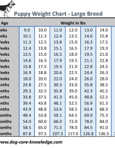 Puppy weight chart for large breed size dogs also this is how big your dog will be rh care knowledge