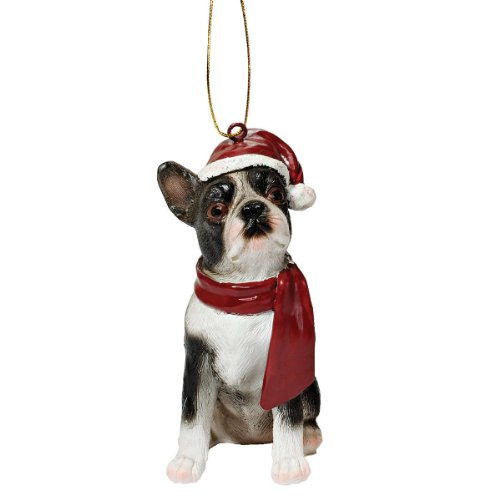 Boston Terrier Nutrition: Keeping Your Pet Healthy
