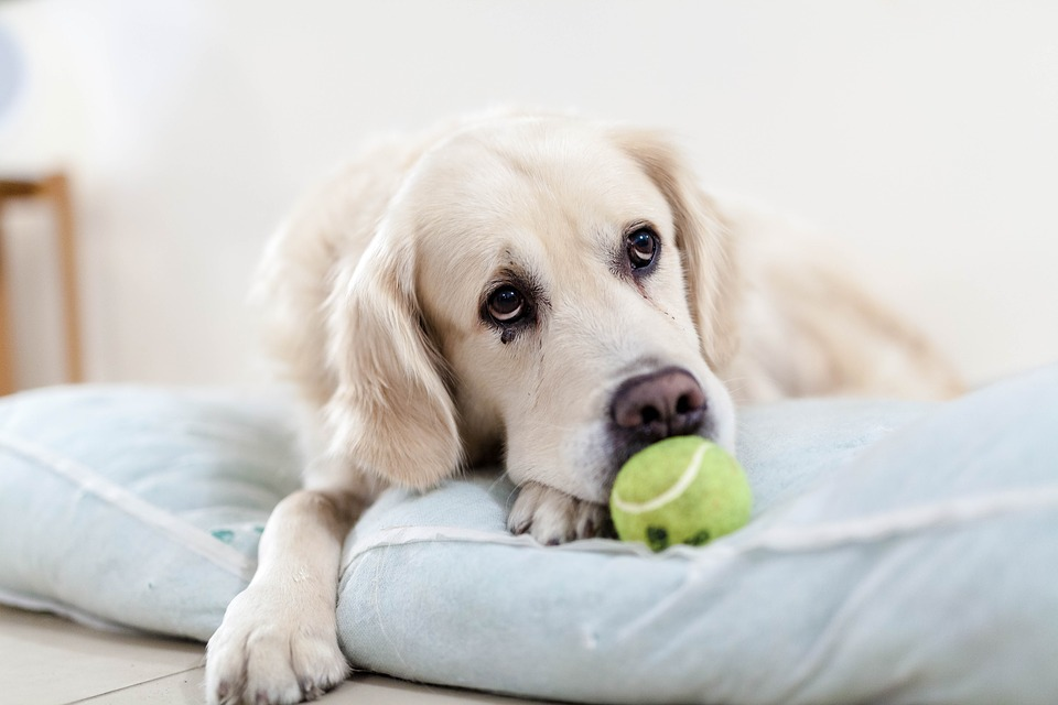 How To Care For A Dog While Working Full Time