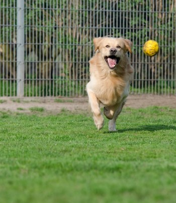 6 Strategies for Living with High-Energy Dogs