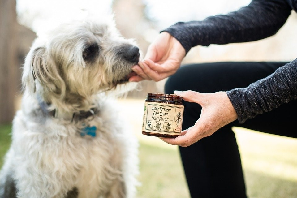 Buyer's Guide to CBD Dog Treats