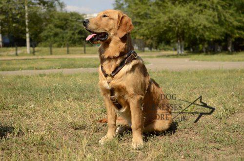 golden retriever harness for