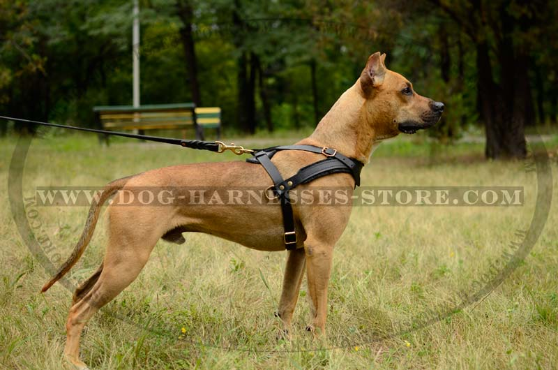 Tracking Pulling Leather Dog Harness For All Breeds H5