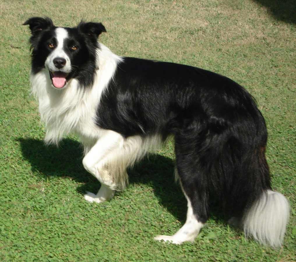 Image Result For Best Dog Breeds For Allergies