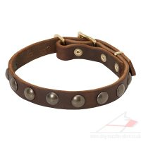 Small Dog Collar with Brass Studded Design