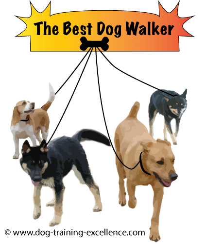 Start A Dog Walking Business 3 Steps To Success