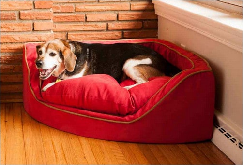 Top 9 Best Dog Beds in 2019 Reviews  Buying Guide