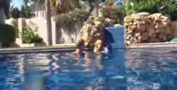 diving-labrador-pool3