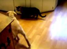 Puppy Met Cat