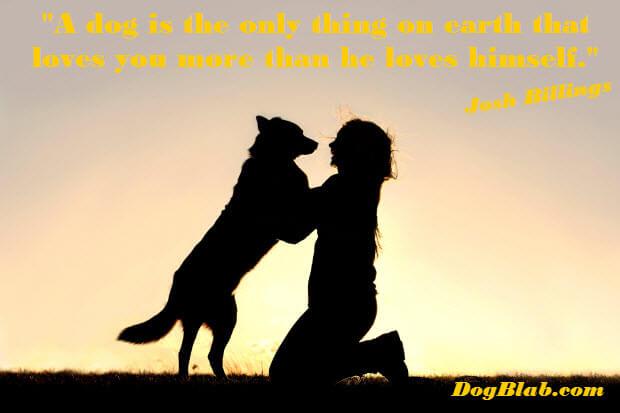 dog-love-more-then-himself