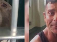 man cries pit bull stolen