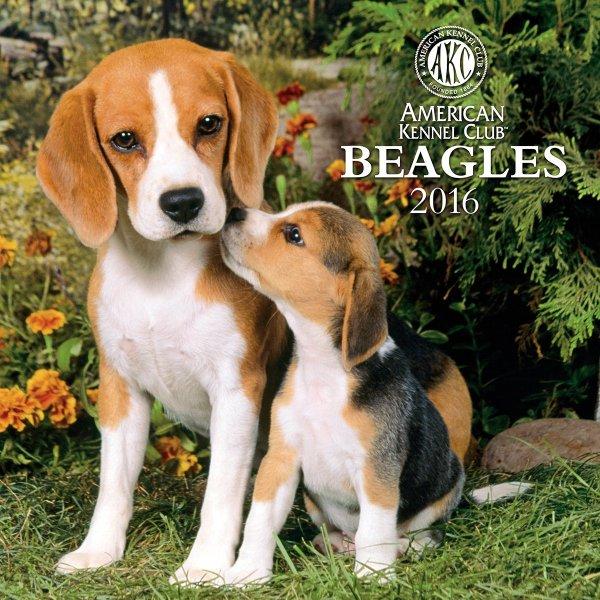 American Kennel Club Beagle 2019 Calendar