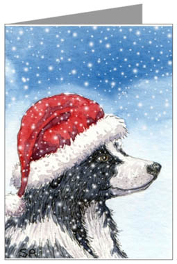 Border Collie Border Collies And