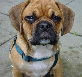 Ugly Mutt Dog Pictures
