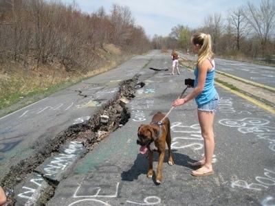 https://i0.wp.com/www.dogbreedinfo.com/images21/BrunoBoxerPuppy47WeeksCentralia1.jpg