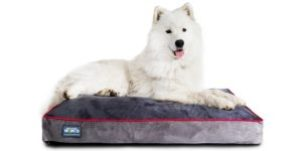 Better World Orthopedic Dog Bed Review