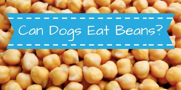 Can Dogs Eat Green Lima Beans