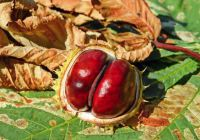 Can dogs eat chestnuts?