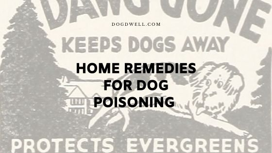 home remedies for dog poisoning