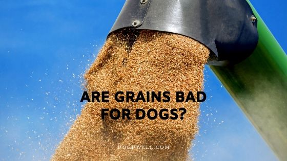 are grains bad for dogs